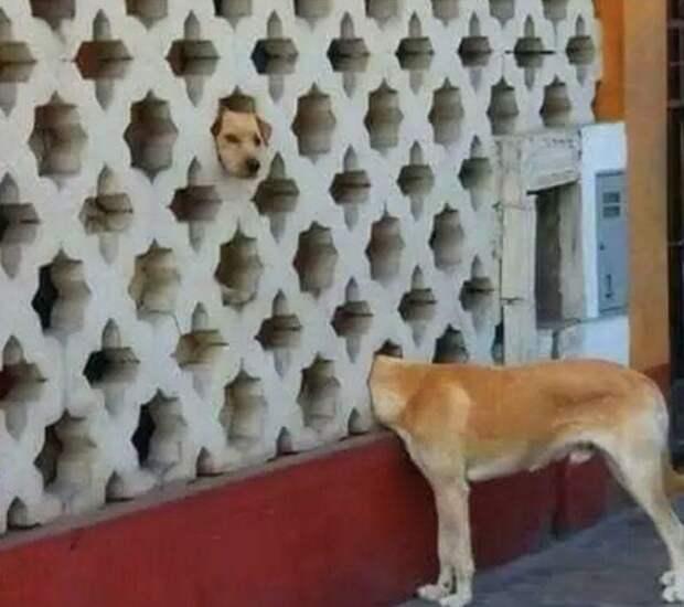 Единственный в мире забор-телепорт Радость, дом, забор, прикол, строительство, цвет, юмор