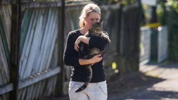 В Новой Зеландии хитрый кот жил на два дома