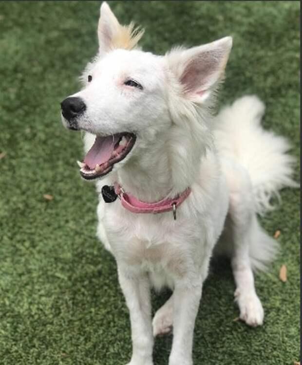 Белая собака просила помощи у людей, но все боялись к ней подходить, из-за того, что она была лысая