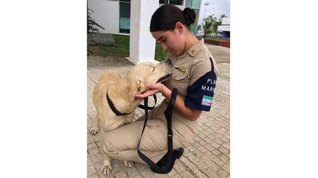 Моряки в Мексике взяли на службу собаку, которую спасли во время наводнения