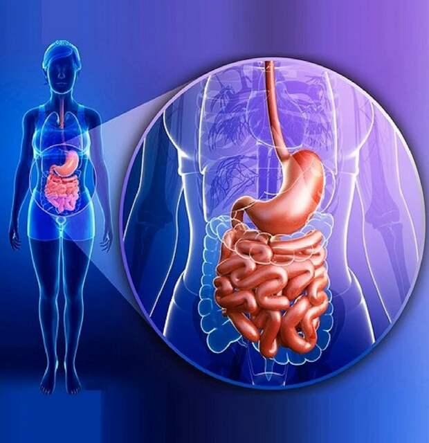 Как ВОССТАНОВИТЬ микрофлору кишечника: 10 лучших научных способов