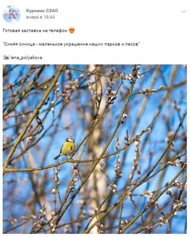 Фото дня: лазоревка в Куркине