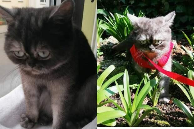 Кошка, которую никто нехотел забирать изприюта, стала звездой соцсетей