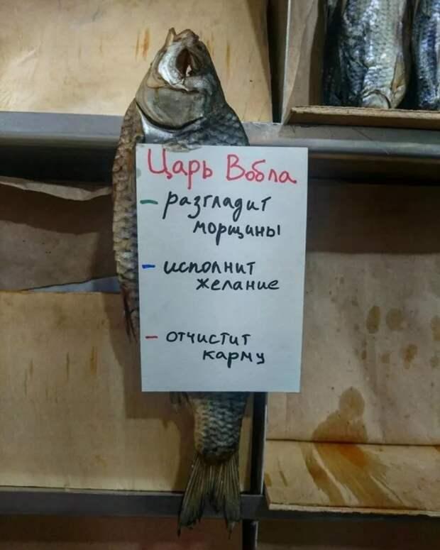 Эволюция Золотой рыбки. |Фото: Поросёнка.нет