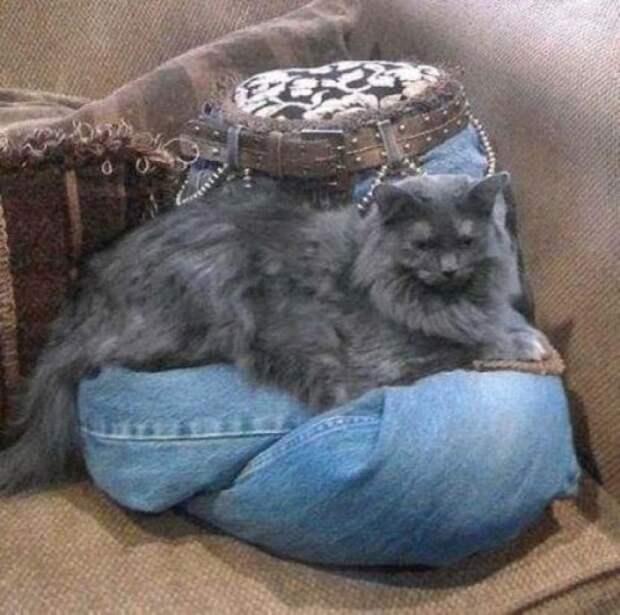 cathouse22 Дизайн для котов