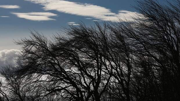 Синоптики предупредили об усилении ветра на Кубани до 22 м/с