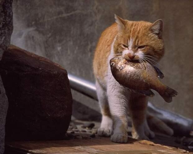 https://i.pinimg.com/736x/e9/0f/bc/e90fbccdb1e9a3c387295f4ce95a64e9--funny-kittens-funny-pets.jpg