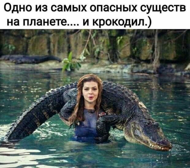Возможно, это изображение (1 человек и текст «одно из самых опасных существ на планете.... и крокодил.)»)