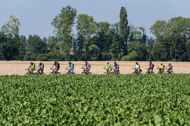 На референдуме в Швейцарии голосуют о велосипедах и еде