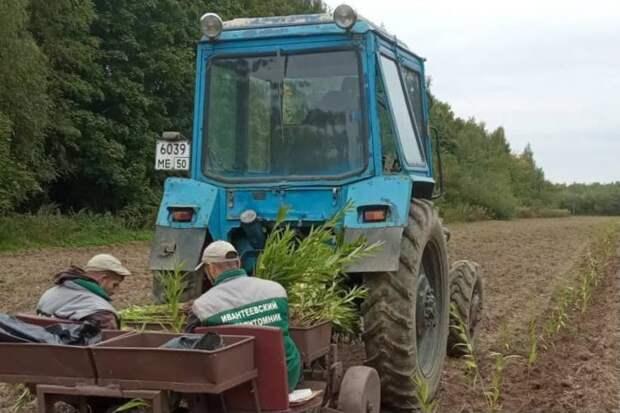 Еще 20 тысяч саженцев высадят осенью в Ивантеевском лесопитомнике