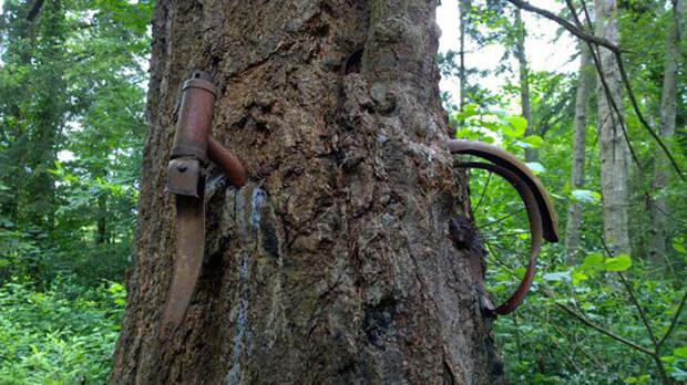 Что на самом деле произошло с велосипедом, вросшим в дерево?