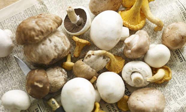 Добавляем в меню блюда из грибов. 7 рецептов, где грибы надо не только жарить