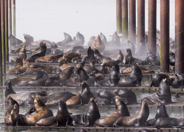 Неотразимые снимки победившие в конкурсе фотографии Nature Conservancy