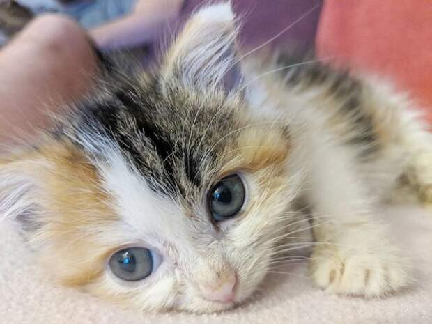 Однажды под крыльцом нашли крохотного котёнка-злюку...