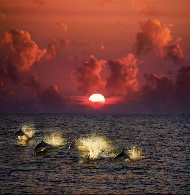 """М.Сейгал """"Жизнь на море полна красоты и спокойствия""""."""
