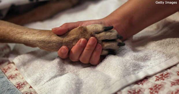 Злой ветеринар показал, почему нельзя бросать животных в одиночестве у врача