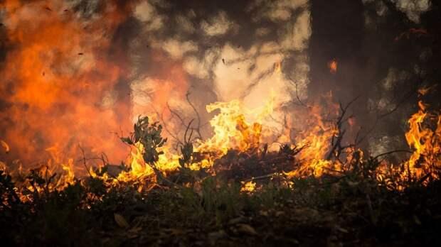 Родственники нашли обгоревшее тело пенсионерки в огороде дома под Белгородом