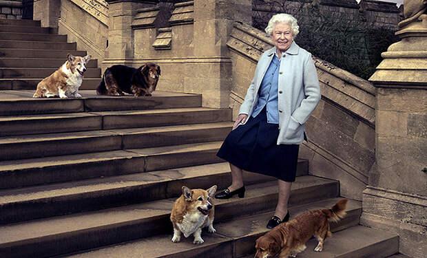 Елизавета II дала необычные клички своим новым собакам