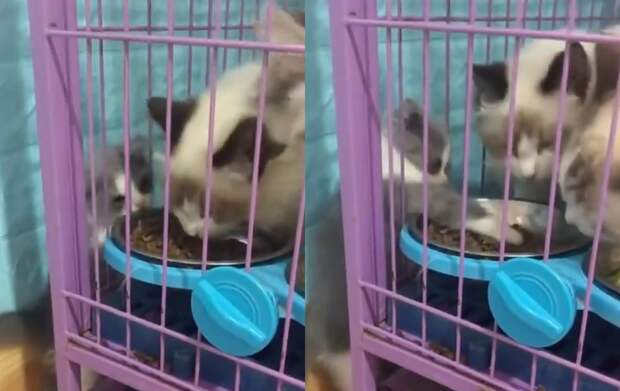 «Поделись с ребенком»: котенок потребовал отдать ему всю еду