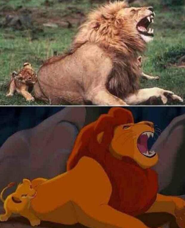 Львенок кусает льва