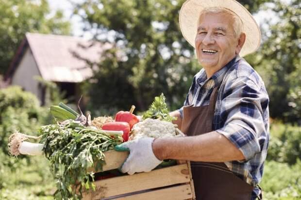 Что делать в огороде в августе