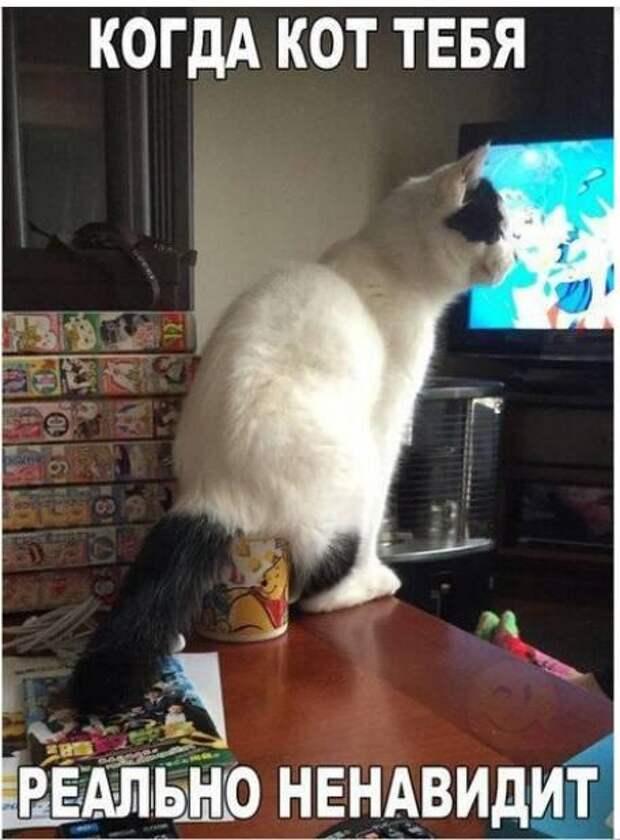На изображении может находиться: люди сидят и кот, текст «когда кот тебя реально ненавидит»