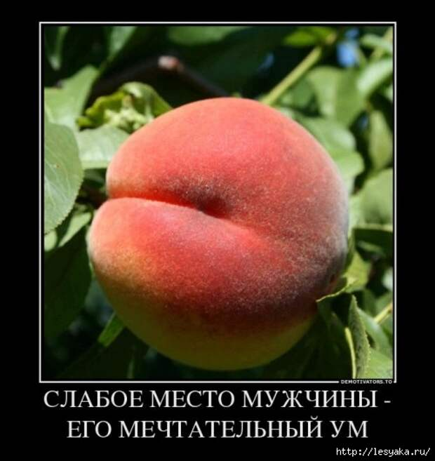 1372745949_novye-demki-13 (500x530, 114Kb)
