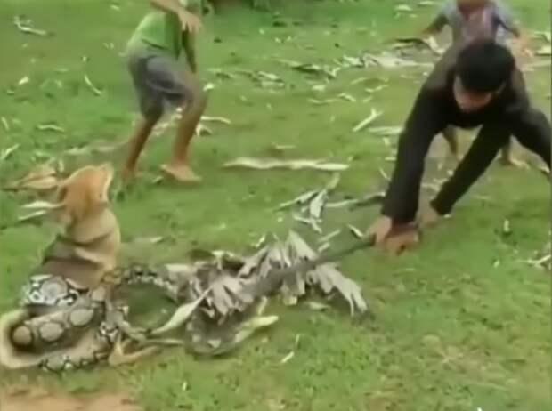Подростки голыми руками вырвали пса из смертельных объятий змеи
