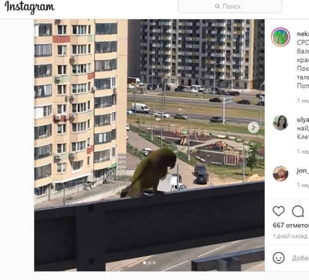 Заблудшего попугая приютили на Покровской