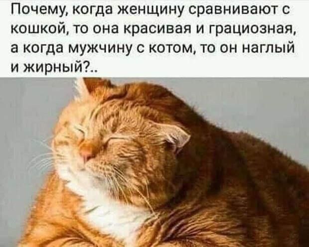 Возможно, это изображение (один или несколько человек и текст «почему, когда женщину сравнивают c кошкой, το она красивая и грациозная, a когда мужчину c котом, Το он наглый и жирный?..»)