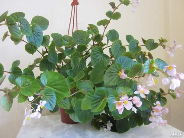Теплолюбивые растения сада зимуют дома