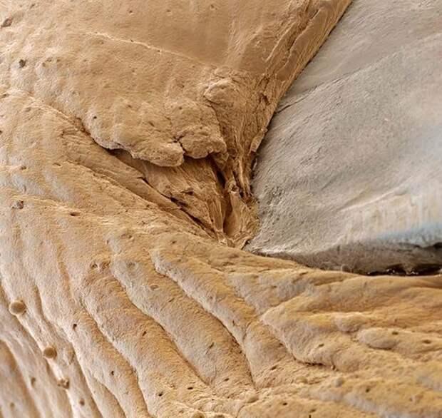 15 удивительных созданий которых не разглядеть без микроскопа