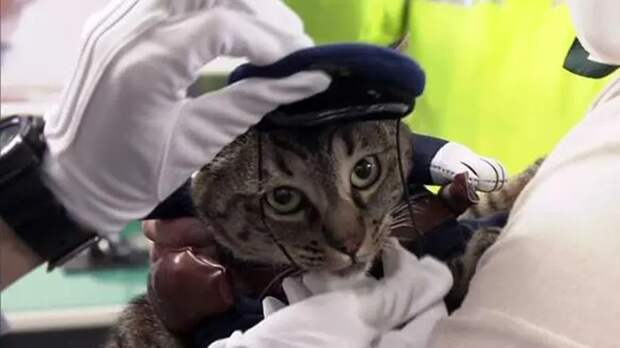 Кошку в Японии на один день назначили руководителем отделения полиции. ФАН-ТВ