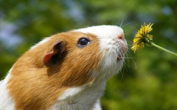 Фотография взята с сайта AnimalPaw.ru