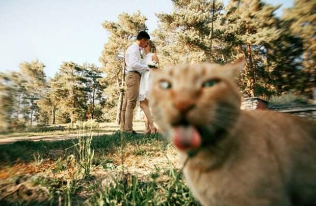 Котики-обормотики