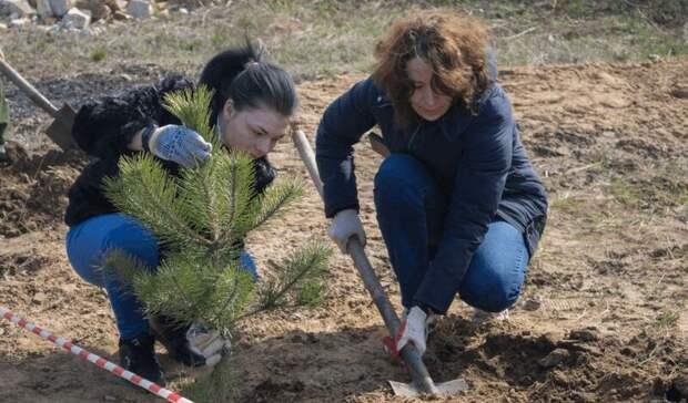 Почти 110тыс деревьев высадят вРостовской области