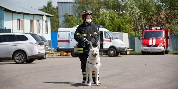 Собаки и их кинологи: как работают четвероногие спасатели