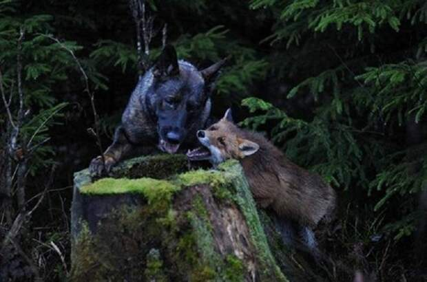 Пес начал каждый день бегать в лес. Хозяин решил узнать, в чем дело интересное, природа, собака