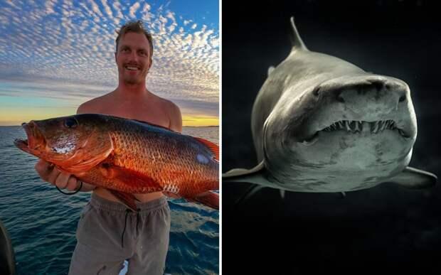 Рыбак чуть не стал добычей акулы. Спастись ему помогли собственные кулаки