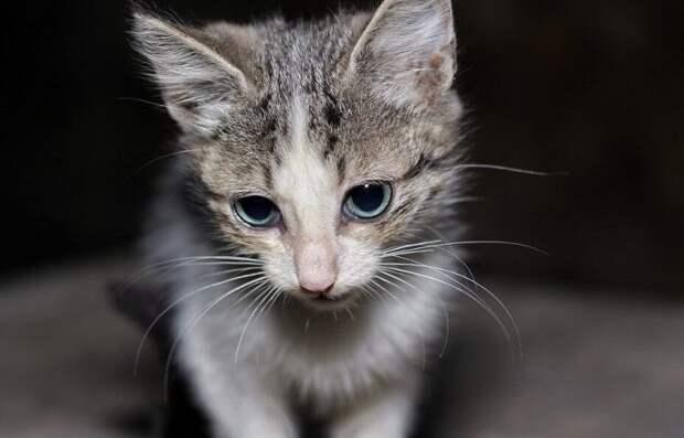 «Сперва зашипел, потом замурчал»: котёнок всегда не доверял людям и теперь не знал, как реагировать на девушку