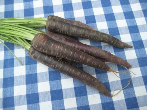 Черная морковка – русский женьшень на вашей грядке