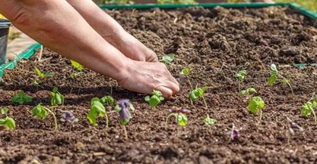 Как теплая и ранняя весна скажется на сроках цветения растений?
