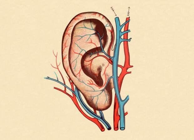 Почему большинству людей не нравится собственный голос в записи?