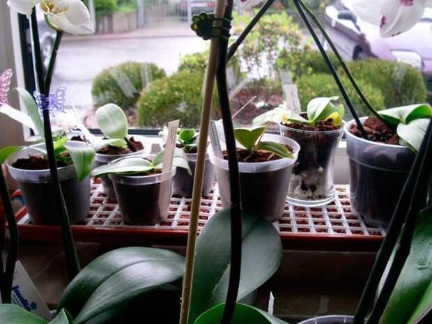 Посадка, влажность воздуха для комнатных растений