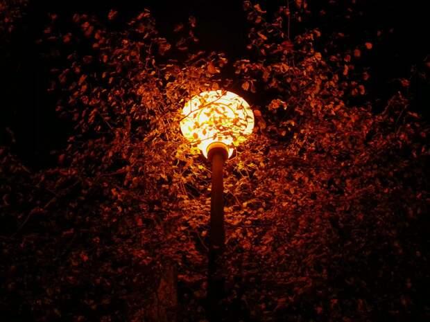 Усиление ветра ожидается в Удмуртии ближайшей ночью