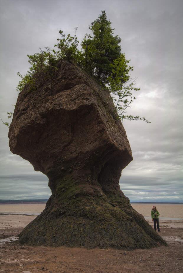 5899278619 b8db94e739 b Природное чудо   скалы Хоупвелл в заливе Фанди