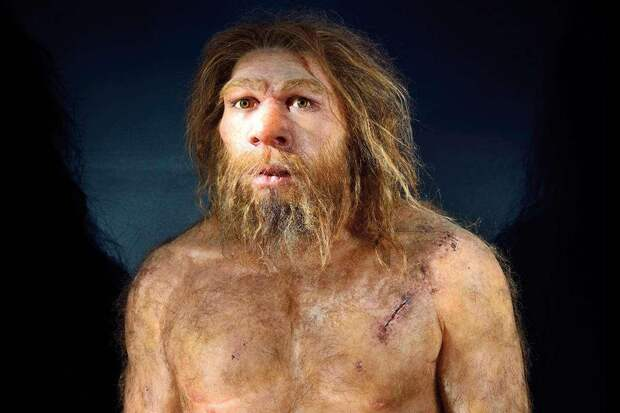 Ученые вырастили в лаборатории миниатюрную копию мозга неандертальца