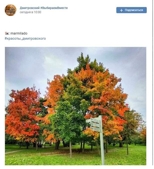 Фото дня:клены в парке «Ангарские пруды» раскрасились багрянцем