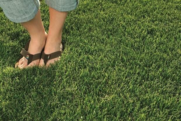 Как посчитать расход семян газонных трав (Норма высева)