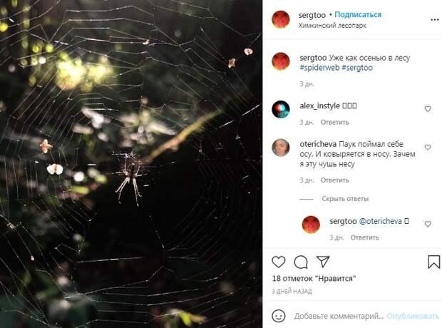 Фото дня: логово хищника обнаружили в Химкинском лесопарке